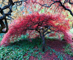 arbol, lindo, and outdoors image