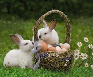 easter, rabbits, and eggs image