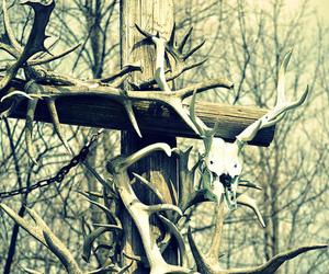 animal, bones, and photo image