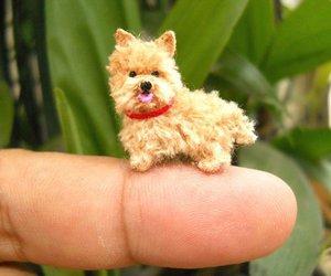 animal, dog, and tiny image