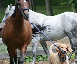 cachorro, cavalo, and dog image