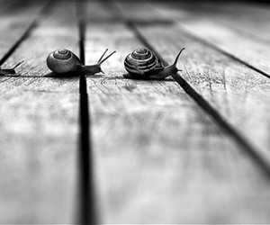 snail, black and white, and family image