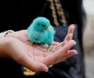 blue, cute, and bird image
