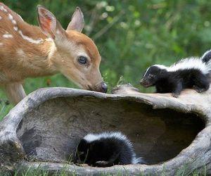 cute animals, deer, and skunks image