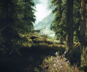 forest, travel, and beautiful image