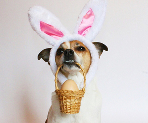 bunny, dog, and easter image