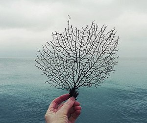 sea, ocean, and tree image