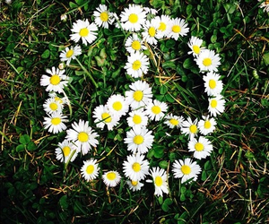 flowers, peace, and love image