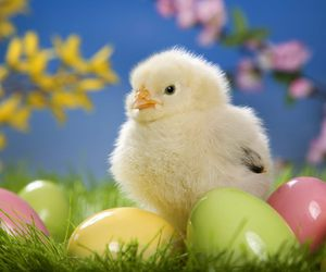 Chick and easter image