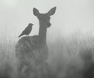 deer, animal, and bird image