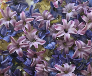 flower and hyacinth image