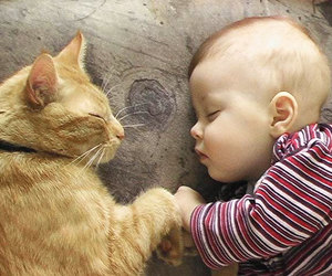 cat, baby, and sweet image