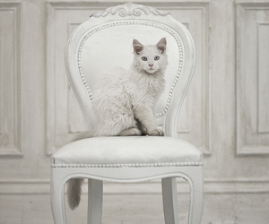 cat, white, and animals image