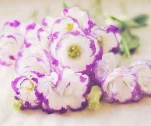pretty and purple image