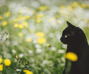 flowers, cat, and animal image