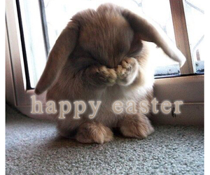 easter, bunny, and happy image