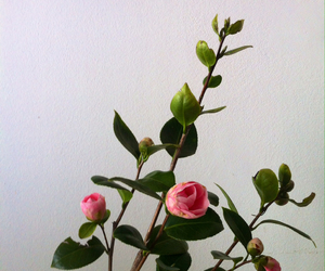 flower, pink, and camellia image