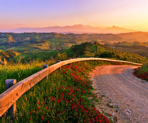 road, sunset, and flowers image