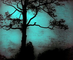 night, black, and branches image