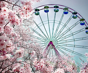 flowers, pink, and ferris wheel image