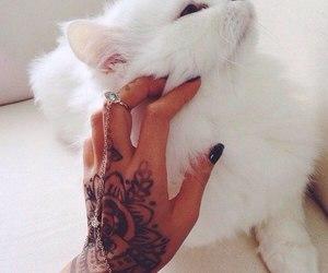 cat, tattoo, and white image