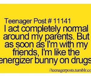 funny, bunny, and parents image