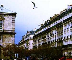 beautiful, bird, and city image