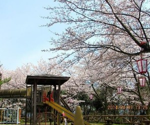 japan, park, and nature image