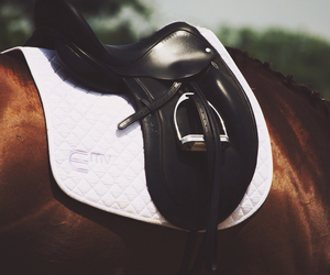 beautiful, horse, and sport image