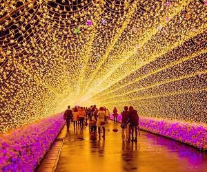 lights, amazing, and people image