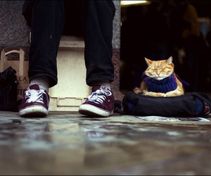 cat, cold, and shoes image