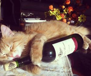 alcohol and cat image