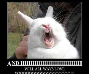 funny, rabbit, and bunny image
