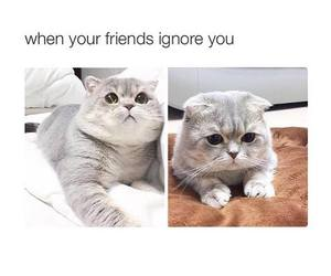 friends, cat, and funny image