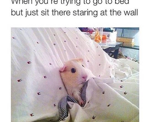 funny, cute, and bed image