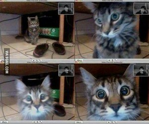 funny, cat, and owner image