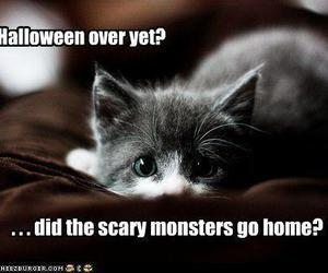 cat, Halloween, and monsters image
