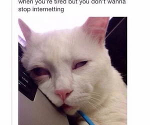funny, tired, and cat image