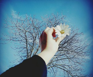blue sky, flower, and free image