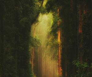 forest, path, and tumblr image
