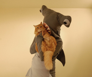 cat, shark, and funny image