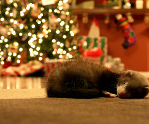 ferret, christmas, and christmas tree image