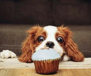 cupcake, dessert, and doggy image