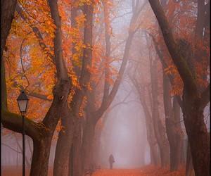 autumn, colour, and orange image