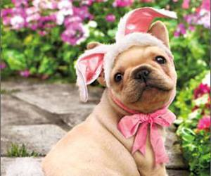 dog, easter, and puppy image