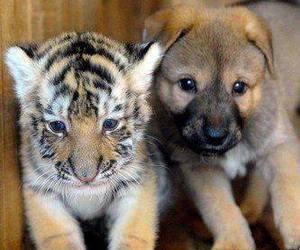 tiger, dog, and animal image