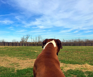artsy, beautiful, and boxer image