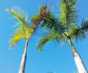 nature, palm trees, and sky image