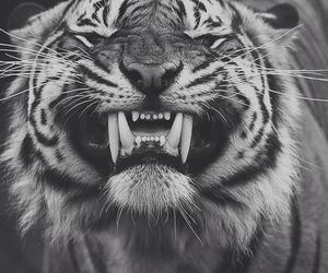 tiger, animal, and smile image