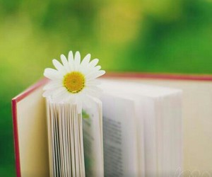 book, reading, and daisy image